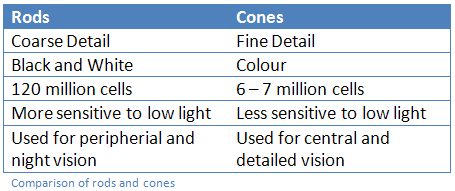 Comparison of Rods and Cones